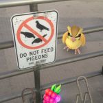 Do not feed pidgeons